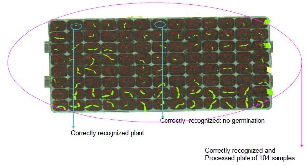 germination-2.jpg